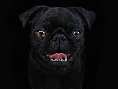Little Dogs Photograph - Gimme A Smile by Joachim G Pinkawa