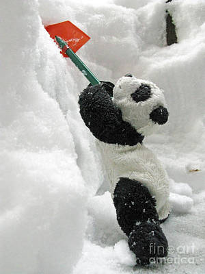 Ginny The Baby Panda In Winter #01 Print by Ausra Huntington nee Paulauskaite