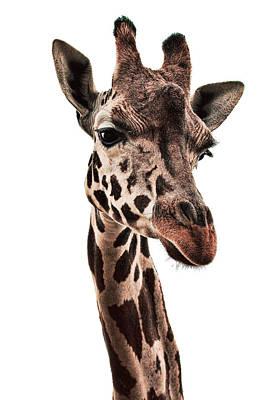Giraffe Photograph - Giraffe 1 by Marcia Colelli