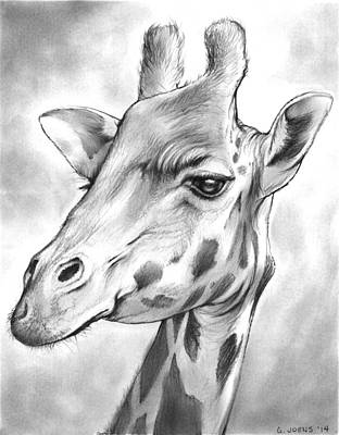 Giraffe Drawing - Giraffe by Greg Joens