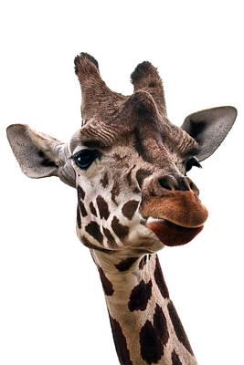 Giraffe Photograph - Giraffe  by Marcia Colelli