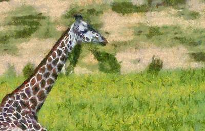 Feed Mixed Media - Giraffe Painting  by Dan Sproul