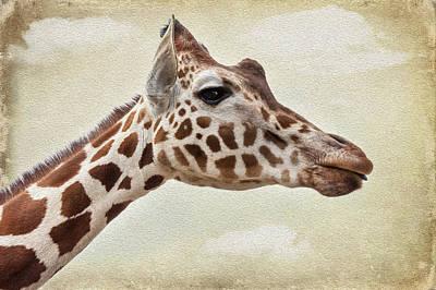 Camel Digital Art - Giraffe by Svetlana Sewell