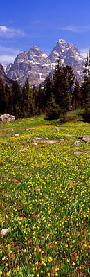 Cascade Canyon Photograph - Glacier Lilies On A Field, North Folk by Panoramic Images