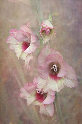 Gladiola Print by Angie Vogel