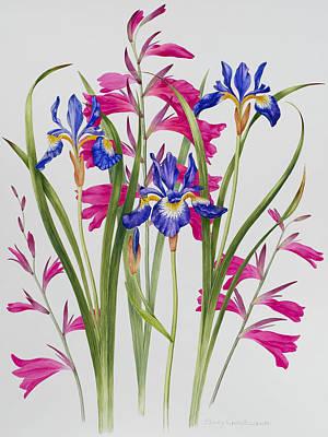 Gladiolus And Iris Sibirica Print by Sally Crosthwaite