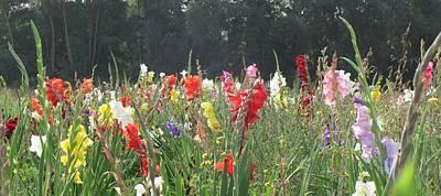 Gladiolus Field Print by Wello Karron