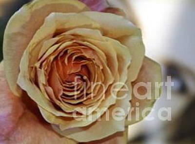 Rose Photograph - Glimpse Of A Rose by Maureen J Haldeman