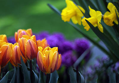 Daffodils Digital Art - Glorious Garden by Jessica Jenney