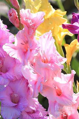Glorious Summer Gladiolus Print by Carol Groenen