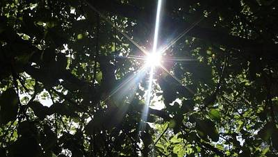 Photograph - Glory Shine by Annette Abbott