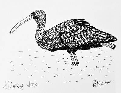 Ibis Drawing - Glossy Ibis by Becky Mason