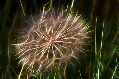 Flowers Photograph - Glowing Dandelion by Shane Bechler