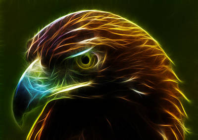 Hawks Mixed Media - Glowing Gold by Shane Bechler