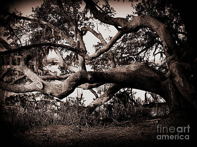 Gnarly Limbs At The Ashley River In Charleston Print by Susanne Van Hulst