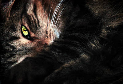 Cat Photograph - Go Away by Marcia Colelli