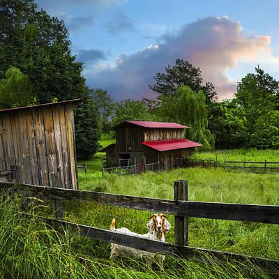 Goat Farm Print by Debra and Dave Vanderlaan