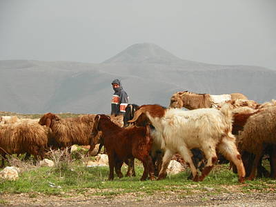 Goat Herder In Jordan Valley Print by Noreen HaCohen