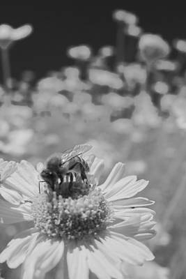 Flower Photograph - Gods Work Black And Wite by Scott Campbell