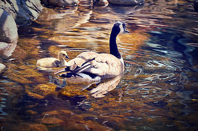 Geese Digital Art - Going Home by Maria Angelica Maira