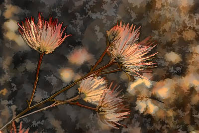 Pinion Photograph - Going To Seed Two by Scott Campbell