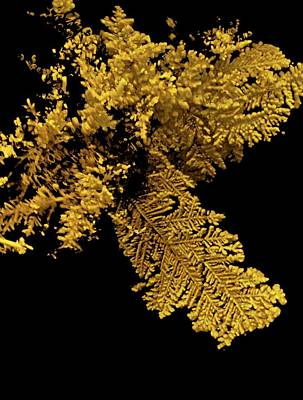 X-ray Image Photograph - Gold by Natural History Museum, London