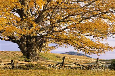 Golden Autumn Print by Alan L Graham