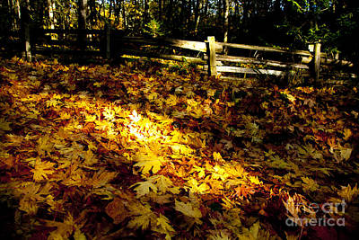 Golden Autumn Leaves Print by Graham Foulkes