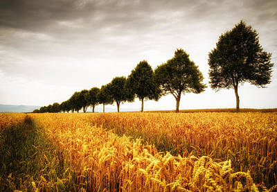 Golden Cornfield And Row Of Trees Print by Matthias Hauser