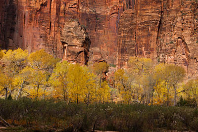 Zion National Park Photograph - Golden Cottonwoods At Autumn by Andrew Soundarajan