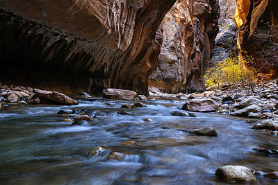 Zion National Park Photograph - Golden Cottonwoods In The Narrows by Andrew Soundarajan