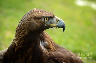 Golden Eagle Photograph - Golden Eagle by RicardMN Photography