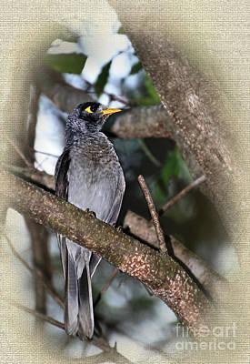 Yellow Beak Photograph - Golden Eye by Kaye Menner