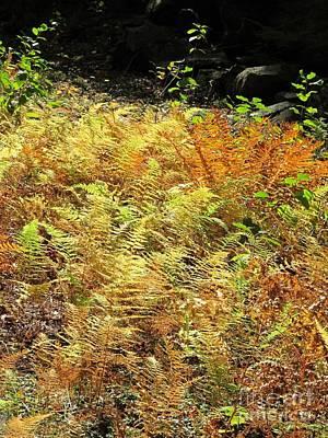 Golden Ferns Print by Linda Marcille