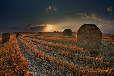 Golden Fields Original by Nikolay Sirakov