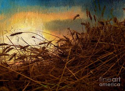 Golden Grain Print by R Kyllo