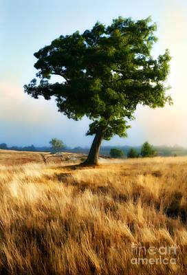 Golden Grass Of The Blue Ridge Mountains II Print by Dan Carmichael