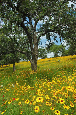 Texas Photograph - Golden Hillside by Robert Anschutz