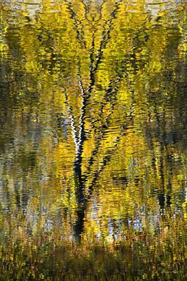 Golden Impressionist Tree Reflection Print by Christina Rollo