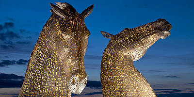 Animals Photograph - Golden Kelpies by David Peat