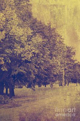 Spring Landscape Mixed Media - Golden Landscape by Jelena Jovanovic
