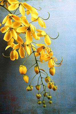 Cassia Blossoms Photograph - Golden Lantern II by Chrystyne Novack