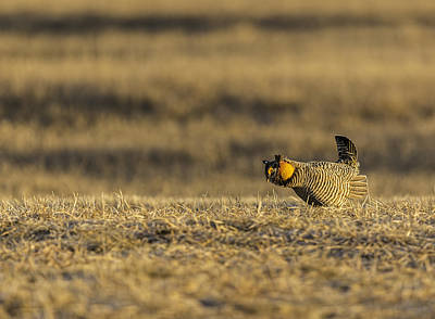 Matting Photograph - Golden Light On The Prairie by Thomas Young