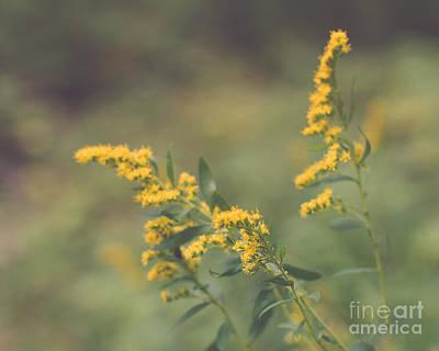 Nature Photograph - Golden by Maren Misner