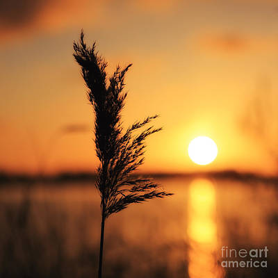 Golden Morning Print by LHJB Photography