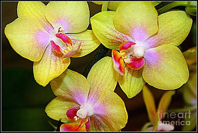 Golden Orchids Print by Dora Sofia Caputo Photographic Art and Design
