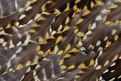 Plovers Photograph - Golden Plover Feather Pattern by Darrell Gulin