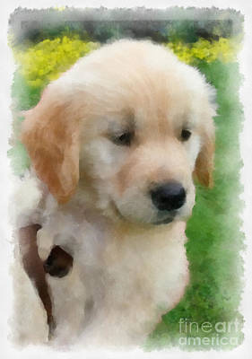 Golden Puppy Owen Print by Betsy Cotton