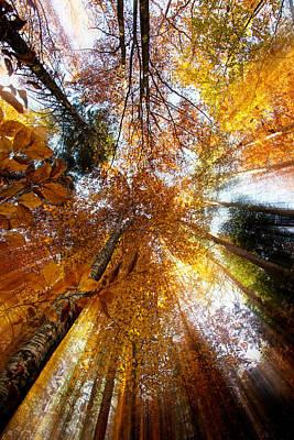Golden Rays Original by Ivan Vukelic