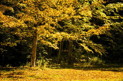 September Photograph - Golden Rays Of Autumn by Donna Doherty